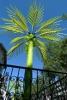 Nature-ville-Palmier